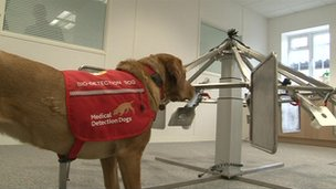 "Daisy was being trained to detect prostate cancer when she ""discovered"" Dr Guest's disease"